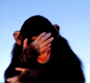 embarrassed-chimpanzee
